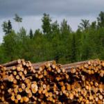 株式や債券投資とは低相関性!4年間で51%リターンの森林投資のオルタナティブ・ファンド!