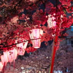 久しぶりの日本で感じる閉塞感と驚きの話と春の訪れ