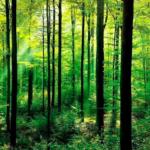 2017年は既にプラス16%台の森林ファンド(オルタナティブ=代替資産への投資)